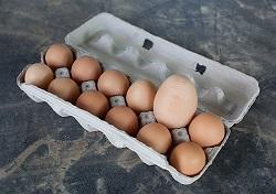 Даниил Хотько: Мы всегда везли инкубационное яйцо из Европы