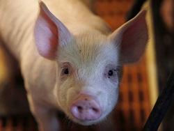 Сергей Юшин: Бразильская свинина для Камчатки дешевле нашей