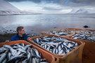 Россия ввела запрет на ввоз рыбных консервов из Польши