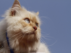 Кошачий питомник: хобби или выгодный бизнес?