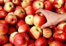 Рынок России закрылся для польских яблок